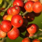 fête de la pomme calvados trévières
